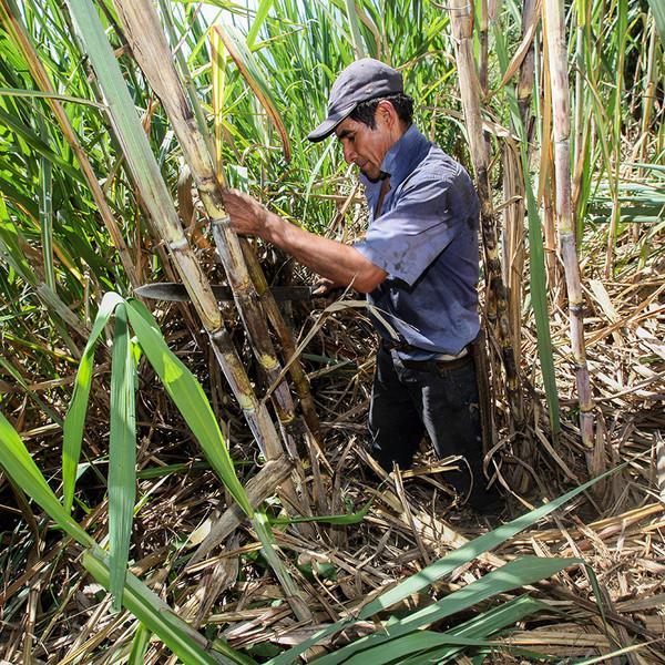 Fundación SENER colabora en el desarrollo de la Sierra de Piura